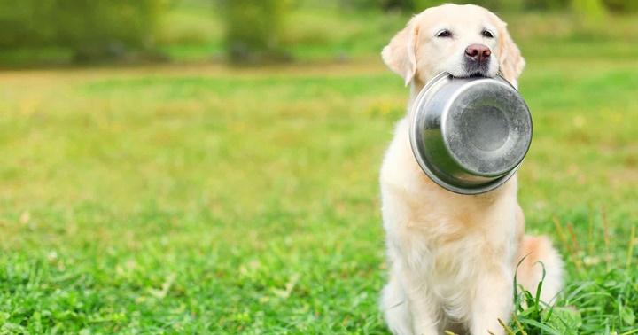 เปิดคลัง! ชามอาหารสำหรับน้องหมามีกี่แบบกันแน่นะ