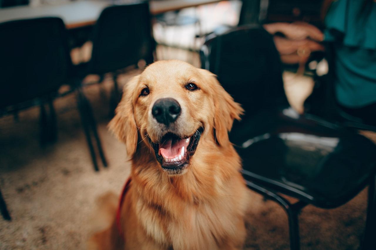 ทำไมสุนัขจึงเป็นเพื่อนที่แสนดีของมนุษย์