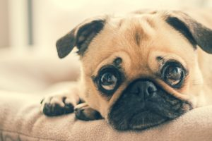 เรื่องอะไรบ้างที่ลูกสุนัขได้รับการถ่ายทอดจากพ่อแม่