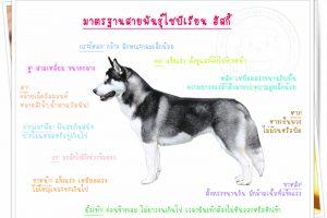ลักษณะเด่น สุนัขไซบีเรียน ฮัสกี้