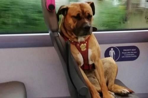 ตูบหลงทางนั่งเศร้าบนรถโดยสาร โซเชียลช่วยตามหาเจ้าของแต่ไร้วี่แวว! ไม่มีใครทราบว่า สุนัขตัวนี้มาจากไหนและใครเป็นเจ้าของ