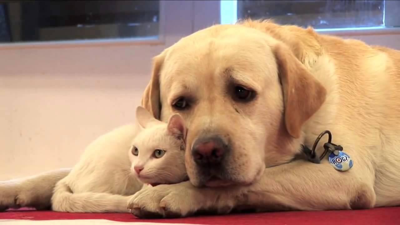 """มติครม. เพิ่มกฏหมาย """"หมา-แมว"""" ต้องขึ้นทะเบียน"""