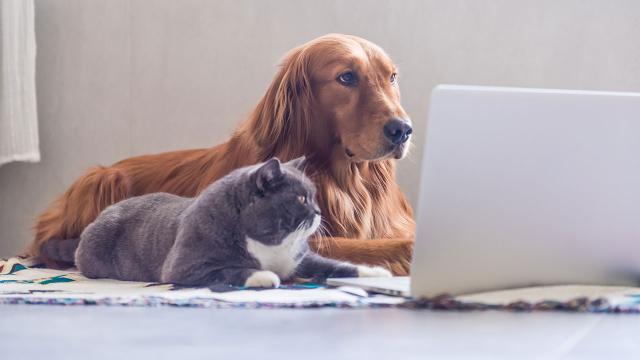 ห้ามเลี้ยงแมวห้า หมาหก
