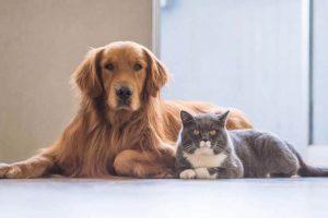โรคในสุนัขและแมวที่เจ้าของต้องระวัง