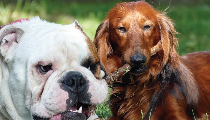 10 อันดับสุนัขยอดฮิตที่คนทั้งโลกเลี้ยง