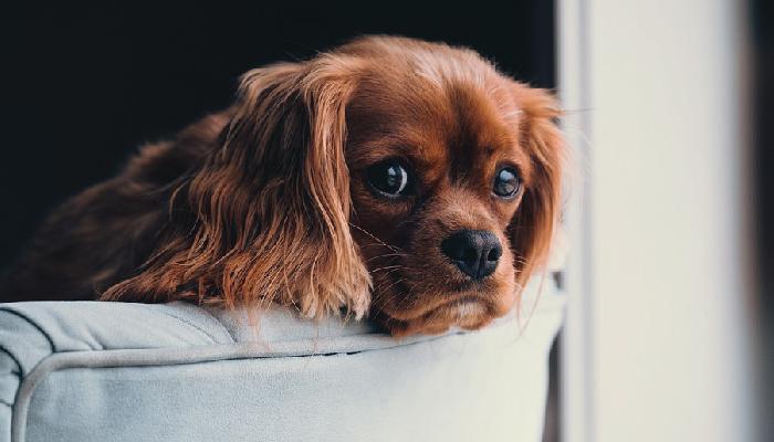 เกร็ดความรู้เกี่ยวกับสุนัขที่ผู้เลี้ยงควรอ่าน