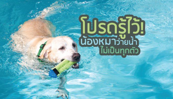 ใครเลี้ยงโปรดรู้ไว้! น้องหมาว่ายน้ำไม่เป็นทุกตัว