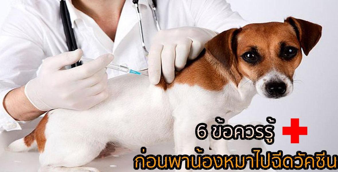 6 ข้อควรรู้ ก่อนพาน้องหมาไปฉีดวัคซีน