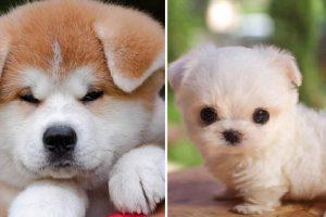 9 สุนัขพันธุ์น่ารักที่ทำให้หัวใจของเราสั่น