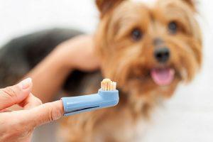 มามะ..เรามาแปรงฟันให้น้องหมากันเถอะ