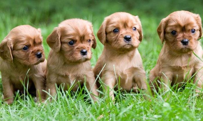 5 พันธุ์หมาเล็กๆ พกพาง่ายอุ้มสบายมือ