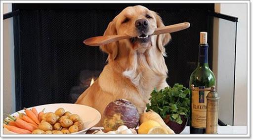 5 อาหารบำรุงข้อ ดีต่อน้องหมาสูงวัย มีอะไรบ้าง ไปดูกันเลย …