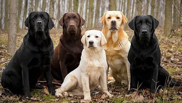 สุนัขพันธุ์อะไรที่คนนิยมเลี้ยงมากที่สุดแห่งปี