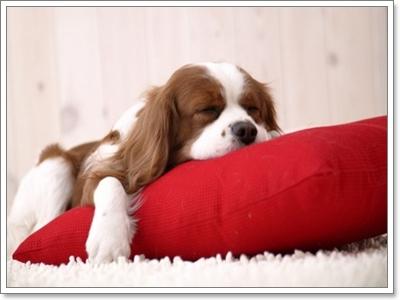 น้องหมานอนหลับทั้งวันผิดปกติไหมนะ?