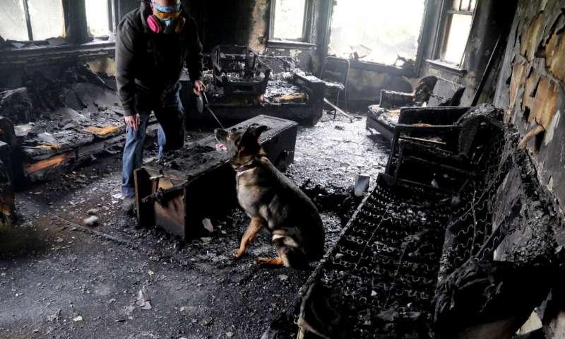 เชื่อหรือไม่ สุนัขสามารถดมกลิ่นพบน้ำมันเบนซินปริมาณ 1 ในพันล้าน