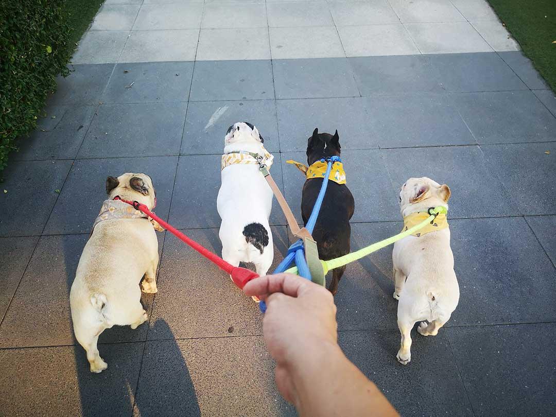 เลี้ยงน้องหมาแบบ New Normal