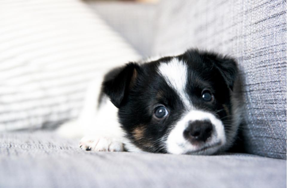 ทำไมสุนัขถึงสะอึก (hiccup) ?