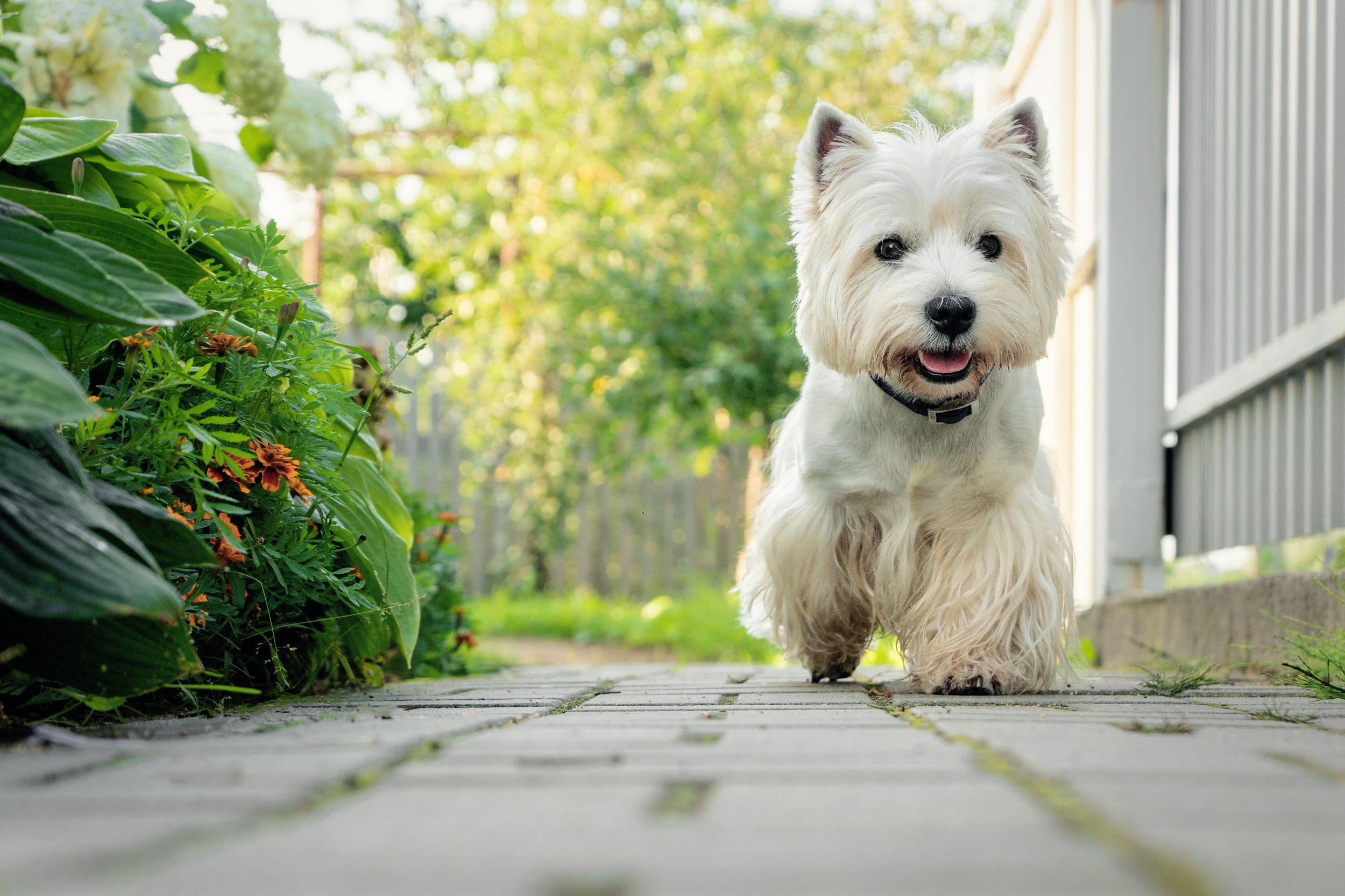 5 สายพันธุ์น้องหมาขนสีขาวสุดฮิต