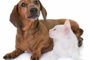 ฮีทสโตรกช่วงหน้าร้อน ข้อควรระวังของน้องหมา-แมว