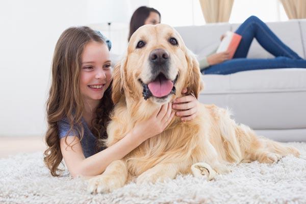 ชาวอเมริกัน 1 ใน 3 คิดว่าสัตว์เลี้ยงของพวกเขาฝึกพวกเขาให้เป็นพ่อแม่ที่ดีขึ้น